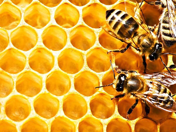 wytrzymalosc-pszczoly